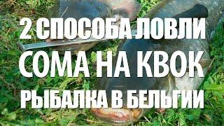 ЛОВЛЯ СОМА на КВОК - РЫБАЛКА в БЕЛЬГИИ на СОМА РЕКА МААС(В видео эффективная ловля сома на квок на рыбалке в Бельгии на реке Маас. Бельгийские рыболовы поделятся..., 2016-02-14T11:40:49.000Z)