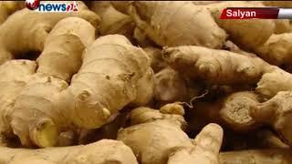 गुणस्तरीय अदुवा भएपनि बजार नपाउँदा सल्यानका किसान निराश – NEWS24 TV