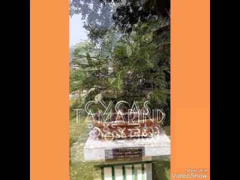 trees names in telugu