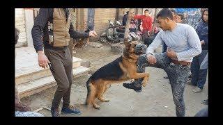 سوق الكلاب من المحله الكبري / وهجوم شرس من كلب جيرمان / سوق الجمعه  dog's market 2019