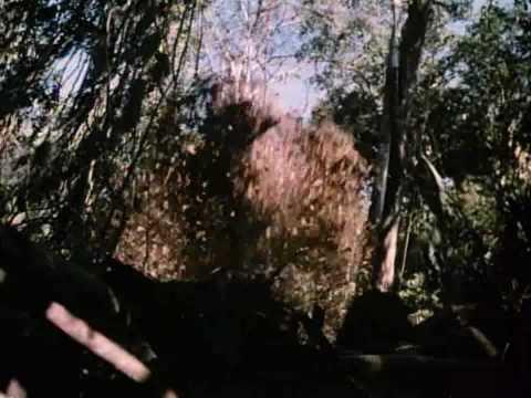 Trailer do filme O Predador