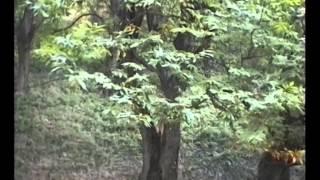Canale (CN) 1995, nei pressi di San Nicolao e dei Biotopi