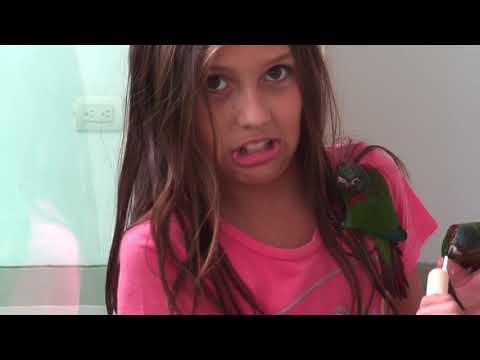 Parrot Feeding Frenzy