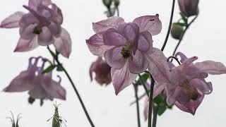 대관령 늦은 봄 꽃