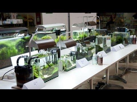 jasa-design-aquascape,-hobi-kreatif-yang-berbuah-manis