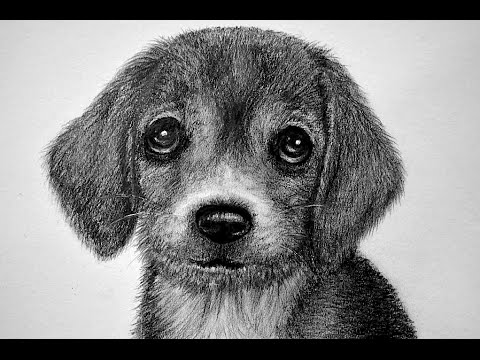 CÓMO DIBUJAR UN PERRO - PELAJE DE ANIMAL/HOW TO DRAW A DOG - YouTube
