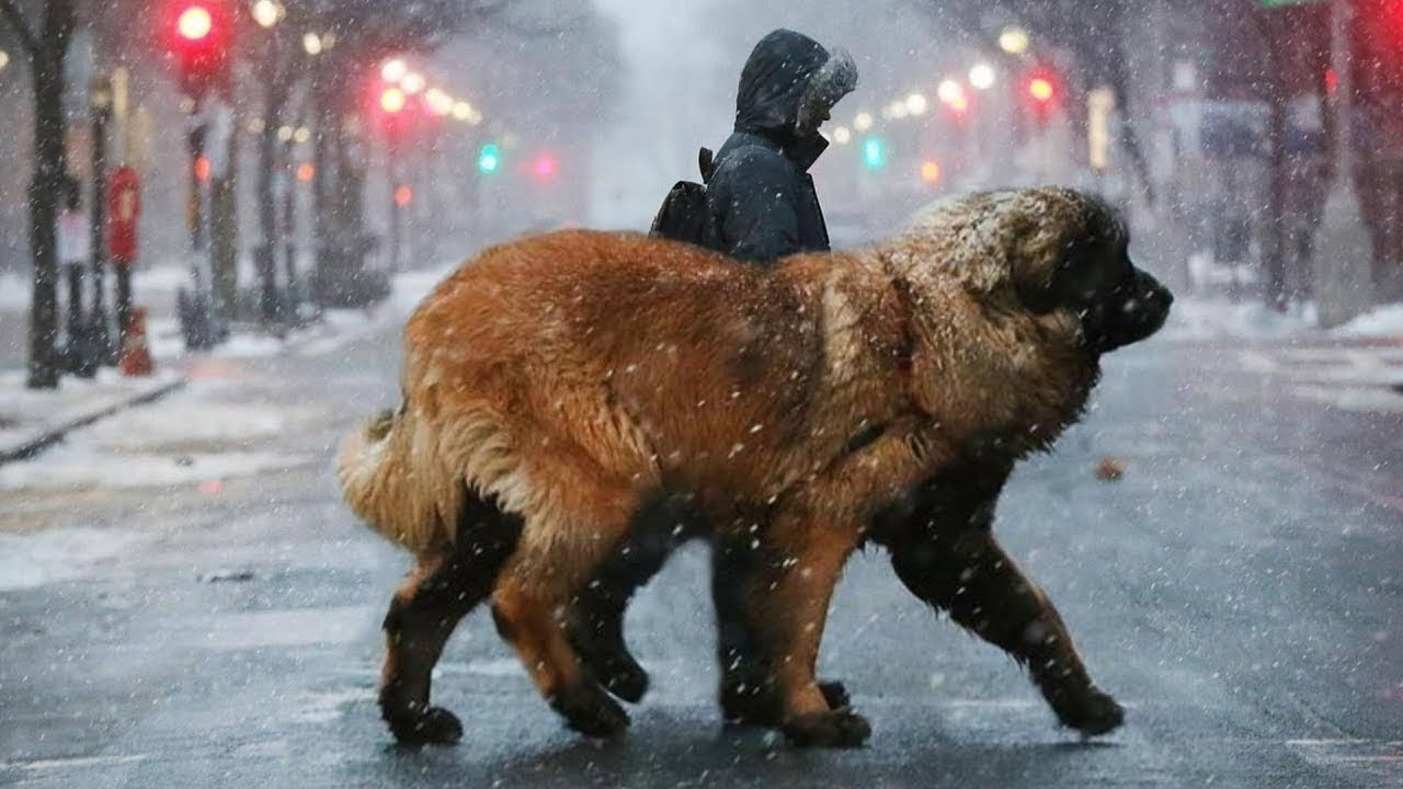 TOP 10 BEST DOGS FOR ALL WEATHER