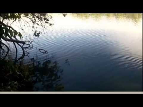 Pesca de tucunaré com isca viva(lambari) - PESCATERAPIA