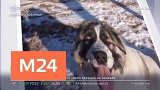 В Москве орудуют мошенники, которые зарабатывают на пропавших животных - Москва 24