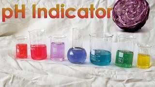 Make Your Own Ph Indicator From Red Cabbage!
