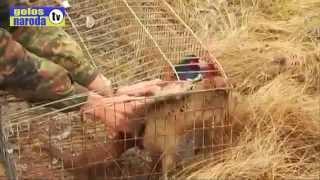 Замечательные животные Луганска