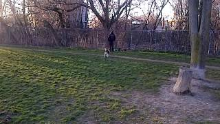 London The Beagle Doesn't Like The Drunk At The Dog Park
