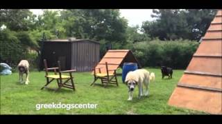 Dog Training Kangal Training