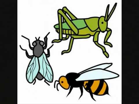Insectos 2 youtube - Como ahuyentar los mosquitos ...