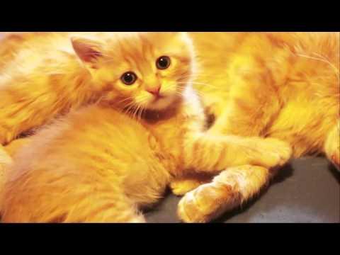Отдам котенка в хорошие руки #3