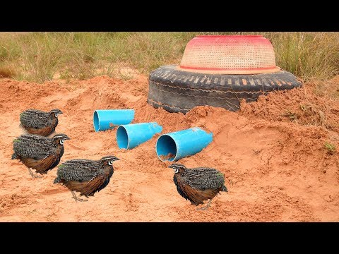 Awesome Quick Bird Trap Using Car Tire And Plastic Basket - How to Make Bird Trap With Water Pipe