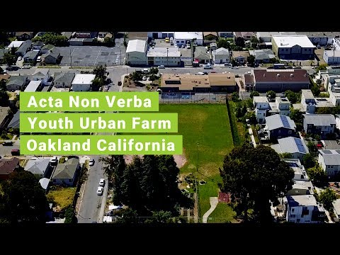 Acta Non Verba Youth Urban Farm Project | Oakland CA | The Praxis Project