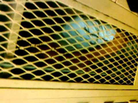 Smirf Sutton, stuck in a locker