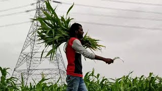 #Maharshi #Telugu #movie #idekada Idekada Cover Song #Sureshbojja Cover Songs #Maheshbabu Movie Song