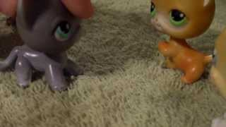 Lps Warrior Cats Into The Wild #18 Busted