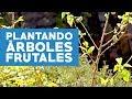¿Cómo plantar arboles frutales?