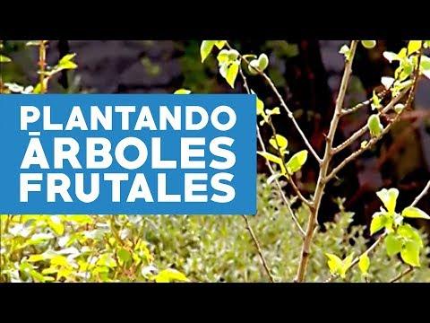 C mo plantar arboles frutales youtube for Arboles frutales para jardin