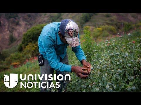 La Sierra de Guerrero, el lugar de donde sale el 60% de la amapola que llega a EEUU