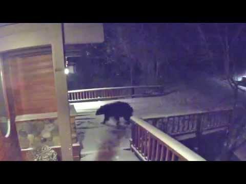 Bears trying to break in garage at Lake Tahoe - Incline Village