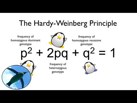 The Hardy-Weinberg Principle:  Watch your Ps and Qs