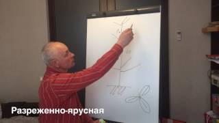 3 основные формировки плодового дерева