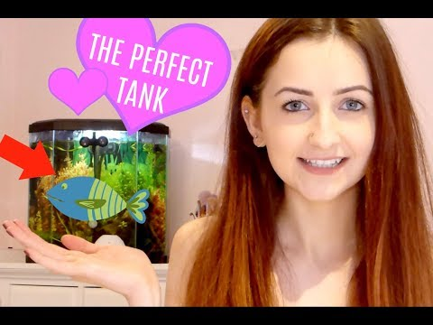 HOW TO SET UP A BETTA TANK & WATER CYCLING EXPLAINED| EVERYTHING YOU NEED TO KNOW |GraciiLacii
