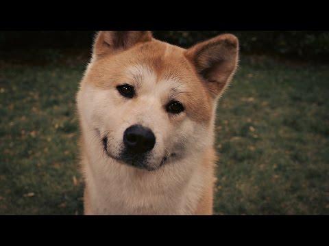 Хатико: Самый верный друг — видео — КиноПоиск