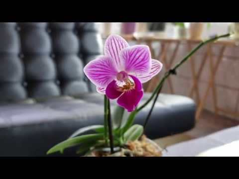 Benefits From Using Calcium, Magnesium And Potassium Supplements With My Orchids.