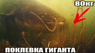 Рыбалка ЗРЕЛИЩНАЯ ПОКЛЕВКА ГИГАНТСКОГО СОМА весом 80кг длиной 2м Подводная съемка Супер трофей