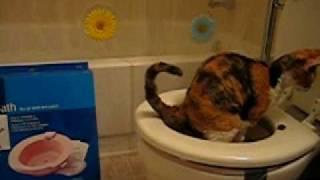 Flying Poop: Cat Toilet Training Day 17
