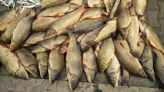 Unbelievable Fishing Cast Net Fishing 2021 Рыбалка Кастинговой Сетью на прудовых