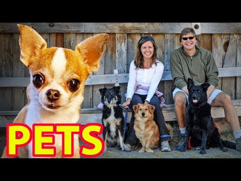 🐶 RV TRAVEL WITH PETS (Esp. Dogs & Cats) 🐱  Expert Advice from Nealys on Wheels!