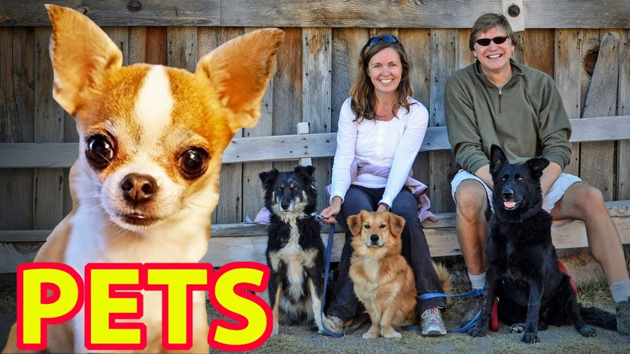 ???? PETS ???? (Esp. Dogs & Cats) & RV Travel - Expert Advice from Nealys on Wheels!
