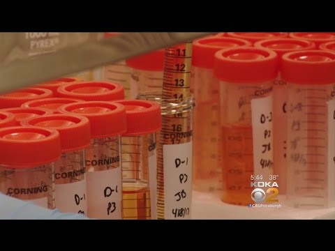 Researchers Working On Vaccine For Those With Celiac Disease