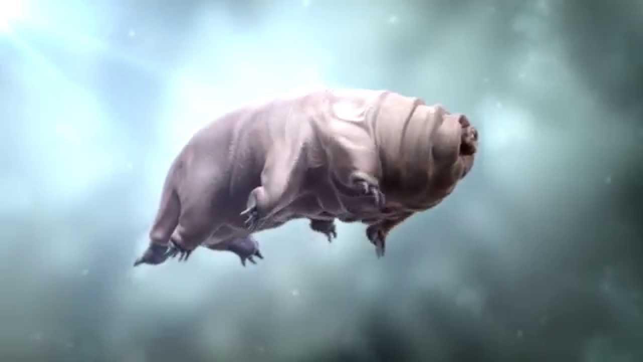 Swimming Tardigrade Youtube