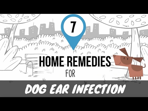 home-remedies-for-dog-ear-infection