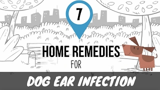 Home Remedies for Dog Ear Infection