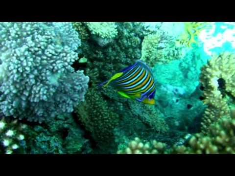 Schnorcheln in Ägypten: Auf Entdeckungstour im Roten Meerиз YouTube · Длительность: 1 мин36 с