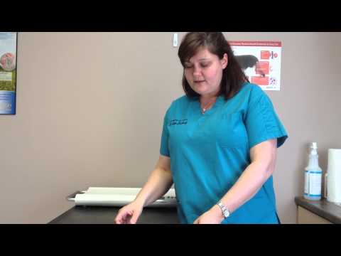 Veterinarian Discusses Cats With Weight Loss