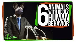 6 Animals with Oddly Human Behavior