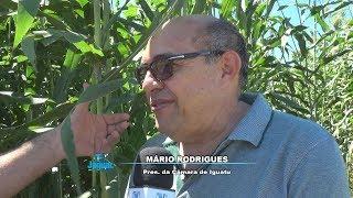 Iguatu - Mário Rodrigues presidente da Câmara enaltece a realização do Dia de Campo Betânia.