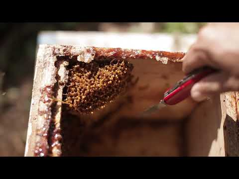 Point to learn Stingless bee (Chinese language) ศทม.ชม.