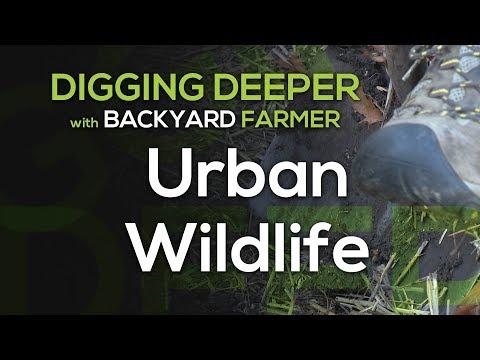 Digging Deeper Urban Wildlife