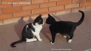 Коты играют.Видео для Детей Funny Kittens.Смешные,забавные КОТИКИ.