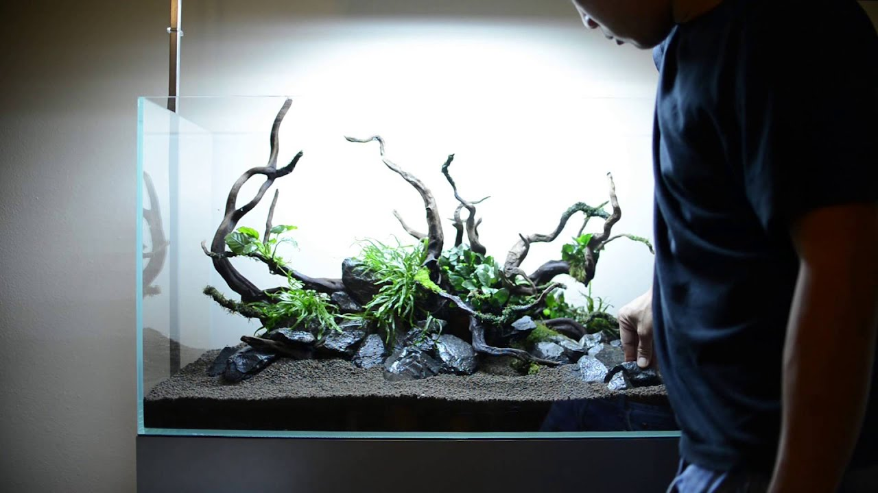 Step by step aquascape time lapse: Aqueous Reflection 90cm ...